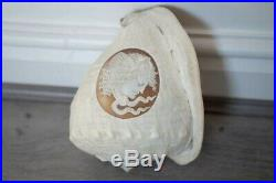 Stunning Antique Victorian Full Conch Shell With Finely Carved Medusa Cameo