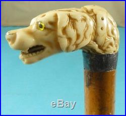 Superb Early Victorian Walking Stick Cane Finely Carved Dog Head Collar Ca 1840